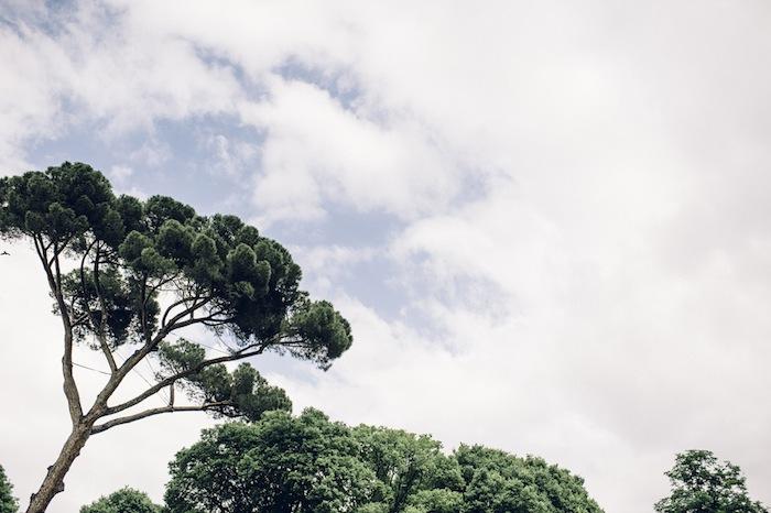 firenze trees