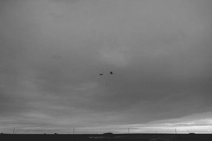2 birds sky reykjavik photography