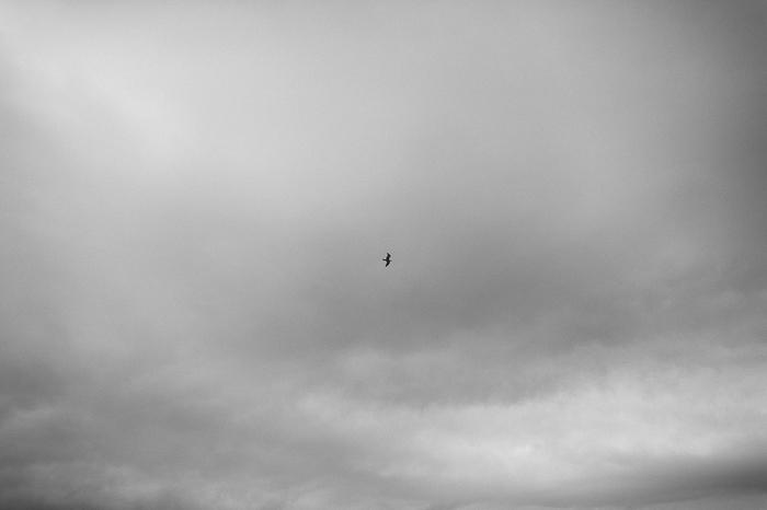 bird sky vik iceland