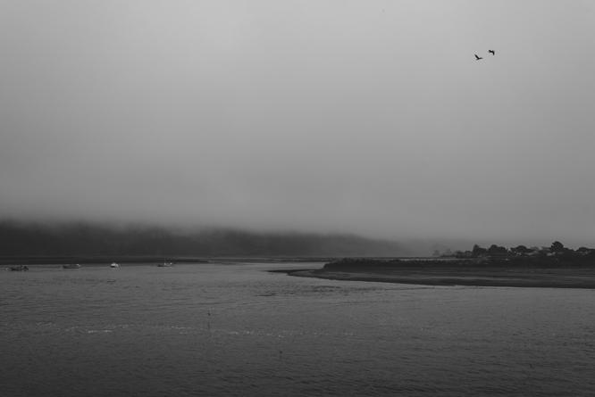 Bolinas-birds-sky